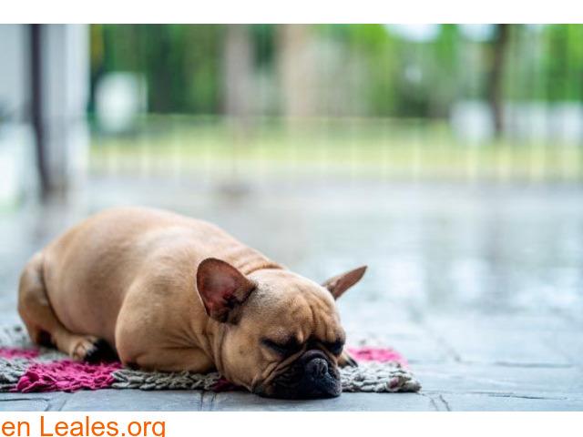 Perros con miedo a la lluvia, ayúdales