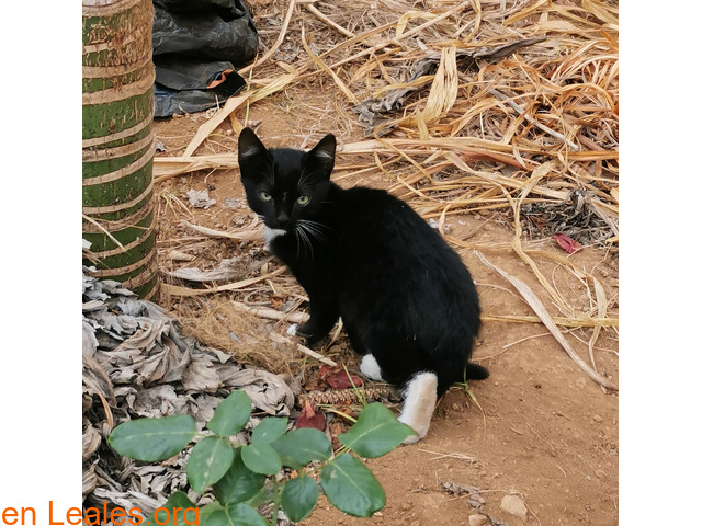 Gatitos buscan hogar responsable