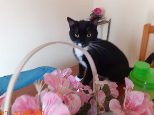 Miki Mimoso en Adopción - 3