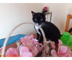 Miki Mimoso en Adopción - Imagen 3
