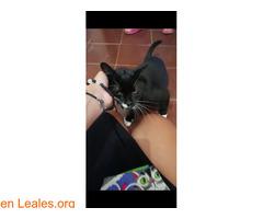 Miki Mimoso en Adopción - Imagen 5