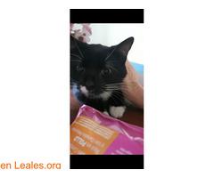 Miki Mimoso en Adopción - Imagen 6