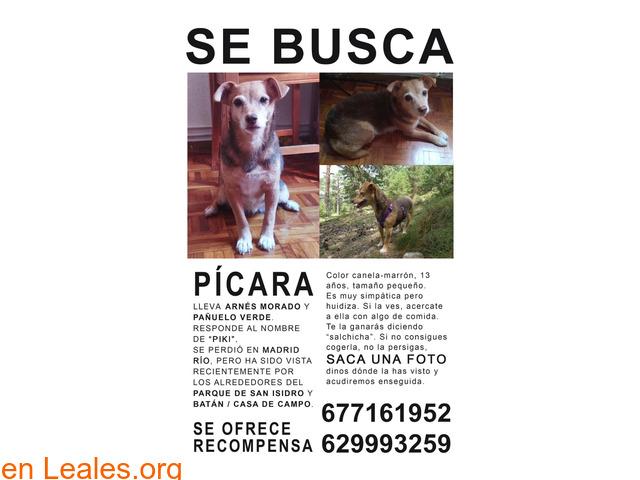 Pícara  - 1