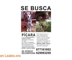 Pícara  - Imagen 1