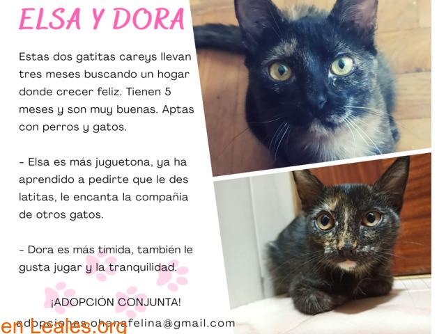 Dora y Elsa en adopción
