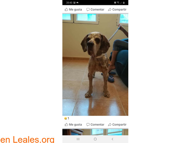 Perro en adopcion - 2