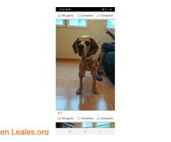 Perro en adopcion - Imagen 2