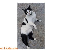 Kiko en adopción  - Imagen 2