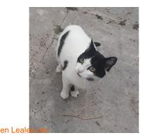Kiko en adopción  - Imagen 3