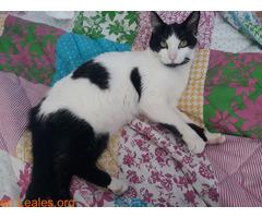 Kiko en adopción  - Imagen 4