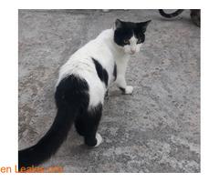 Kiko en adopción - Imagen 5