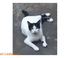 Kiko en adopción  - Imagen 6