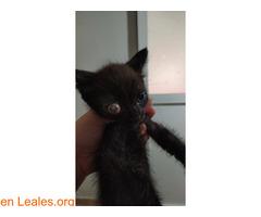 Ayuda para terminar de recuperar su ojo - Imagen 5