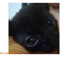 Ayuda para terminar de recuperar su ojo - Imagen 6