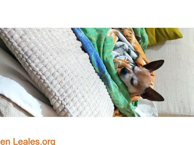 Lo recuperamos gracias a Leales.org - 1
