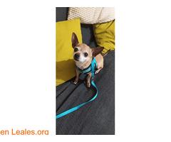 Lo recuperamos gracias a Leales.org - Imagen 2