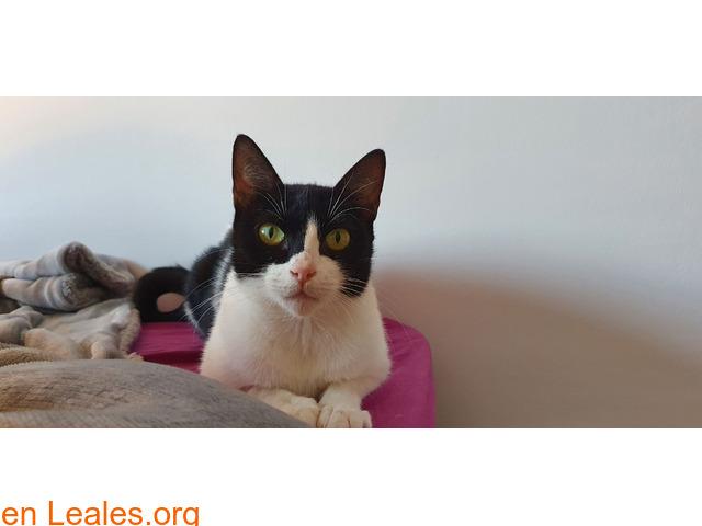Dina, gatita busca adopción responsable