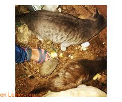Dar de comer a los erizos - Imagen 4