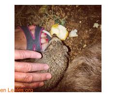 Dar de comer a los erizos - Imagen 5