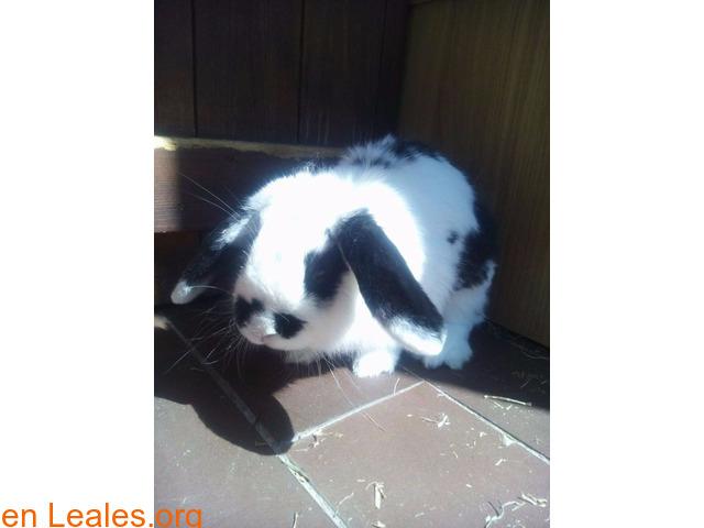 Buscamos hogar para nuestro conejo - 1