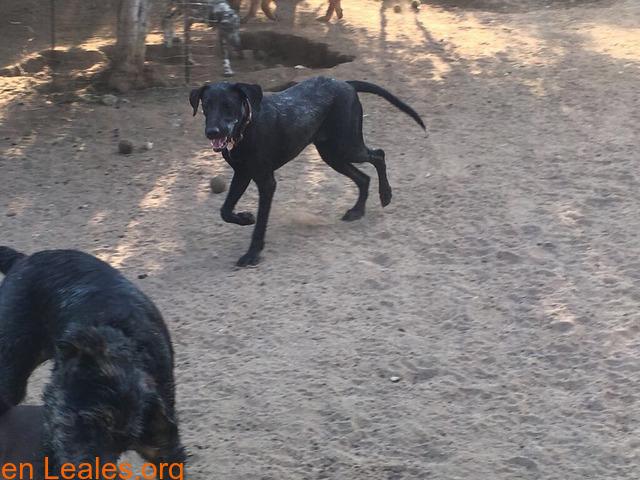 Cachorro de diez meses