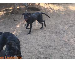 Cachorro de diez meses - Imagen 1