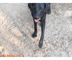 Cachorro de diez meses - Imagen 3