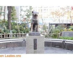 Hachiko, siempre a tu lado - Imagen 1