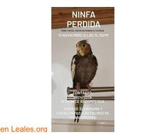 Ninfa perdida Gran Canaria - Imagen 1