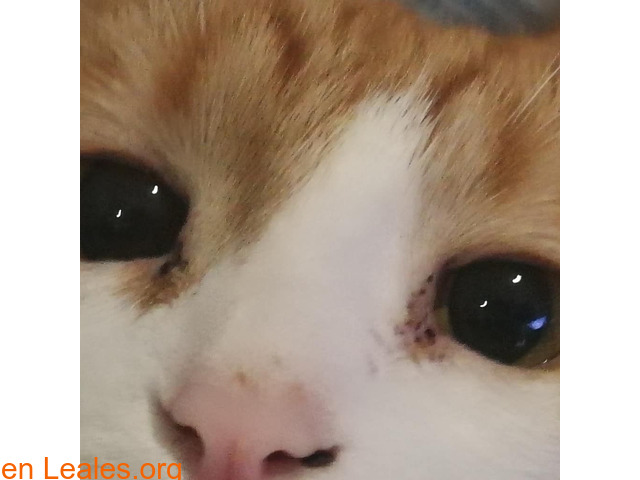 El infinito en sus ojos