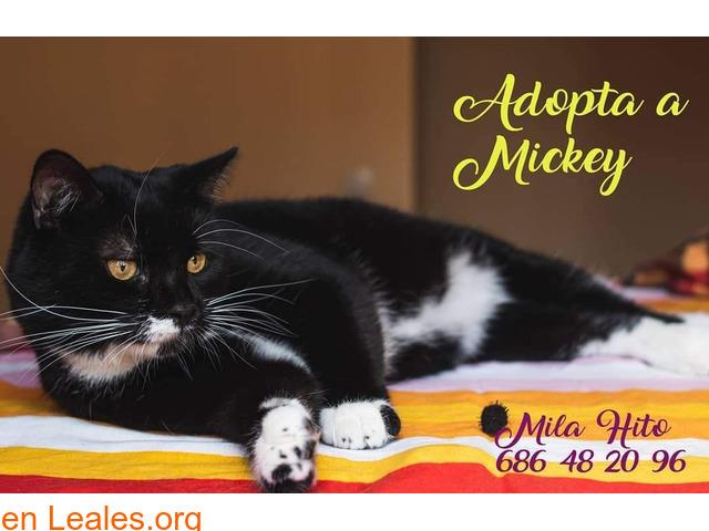 Miki Mimoso en Adopción