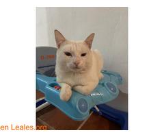 Gato blanco sin castrar y sordo - Imagen 2