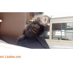 Bella busca un hogar - Imagen 2