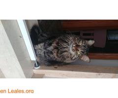 Bella busca un hogar - Imagen 3