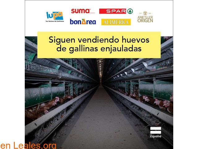 Alimerka - gallinas en jaula