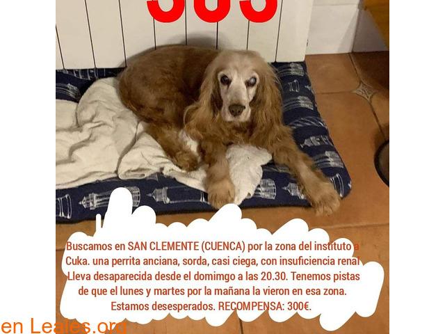 Perdida en Cuenca - 1