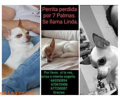 Linda se llama - Imagen 1