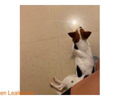 pulsar la foto - Imagen 2