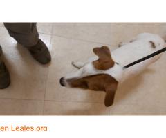 Perro joven ya en casa - Imagen 1