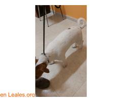 Perro joven ya en casa - Imagen 3