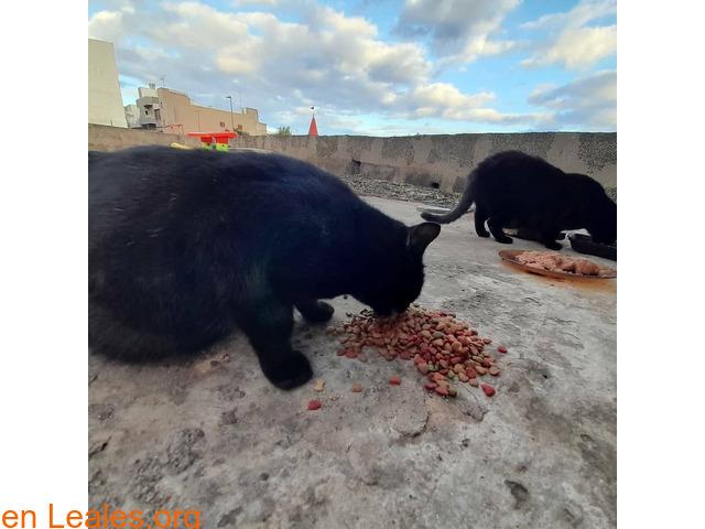 Gatos que doy de comer - 2