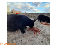 Gatos que doy de comer - Imagen 2