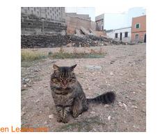 Gatos que doy de comer - Imagen 3