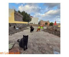 Gatos que doy de comer - Imagen 4