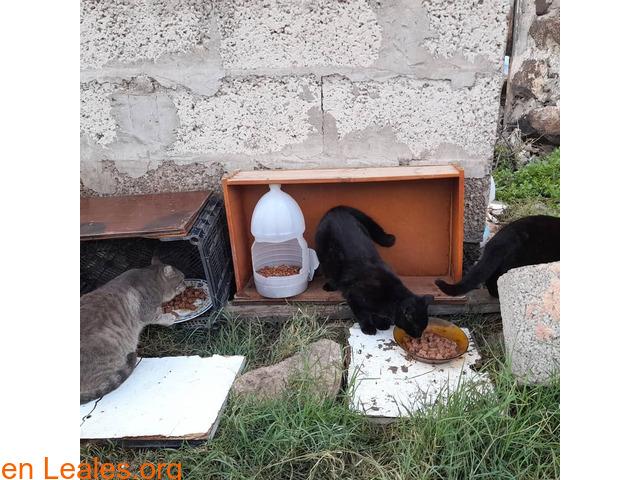 Gatos que doy de comer - 5
