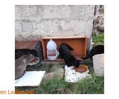 Gatos que doy de comer - Imagen 5
