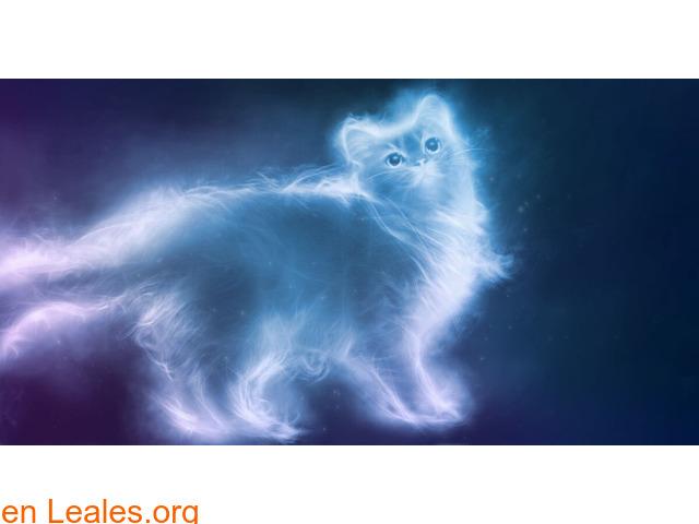 Curiosidades de la energía de los gatos