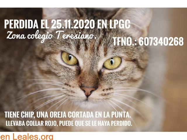 """Gata perdida en Ciudad Jardín (""""Lima"""")"""