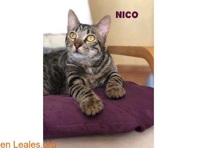 Nico. Cachorro eterno