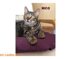 Nico. Cachorro eterno - Imagen 1